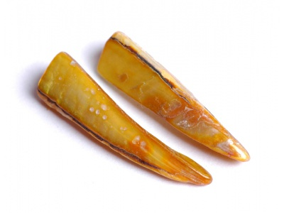 perleťový zub - zlatý  (balení 10 ks)