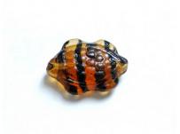 korálek želvička