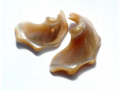mušličky - sloní uši